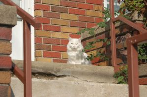 White Cat Red Porch by BeccaPanda