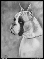 Boxer Xira de Loermo by iSaBeL-MR