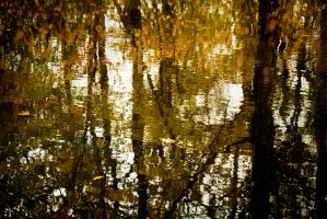 reflections by paracats