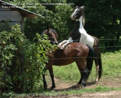 Horse Stock 5 by Miss-Independant1995