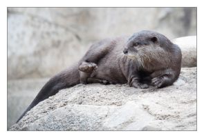 Asian Otter by hoboinaschoolbus