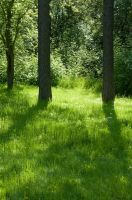 Sunlit Grass and Two Trees by happeningstock
