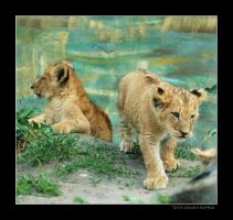 Baby Lions 4 by grugster