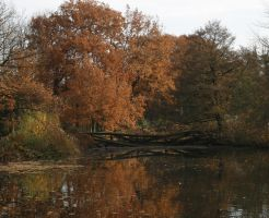 broken bridge over a lake autumn by Nexu4