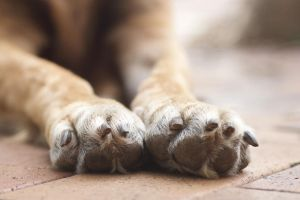 Paws by its-benny