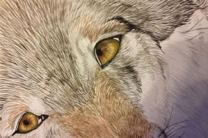 wolf close up by DoctorofMine
