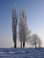 Winter Trees 3784477 by StockProject1