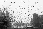 The Birds by Omega300m