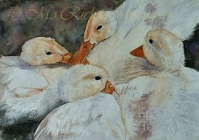 A Dabble of ducks by Mozisart