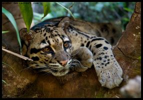still on guard by morho