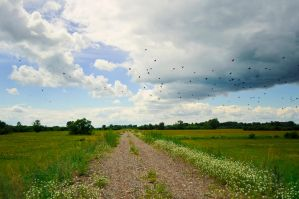 The road, birds, summer by Tumana-stock