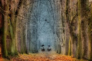 Two in the saddle by tomsumartin