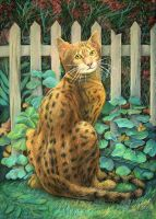 Bengal cat by AldemButcher
