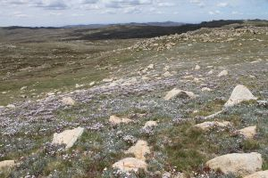Mount Kosciuszko 9 by SolEquus-Stock