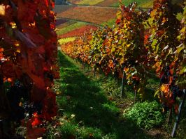 Sunny Vineyards II by Life-For-Sale