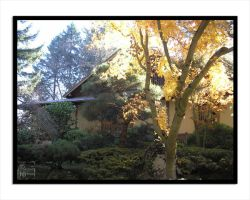 JapaneseGardens-Maple Sunlight by lilith-darkmoon