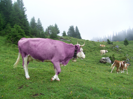 purple cow by teundenouden