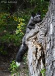 tree fox 2 by Yair-Leibovich