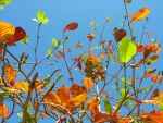 Colourful Leaves by altanimator