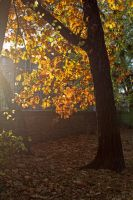 Last Days of Autumn by Anonimus79