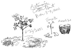 Artemsia Cotton Plant by shiyonin