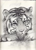 Tiger by stitch-84