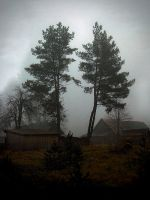 Pines in the fog... by BrokenLens