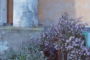 Columns and Flowers by LindaMarieAnson