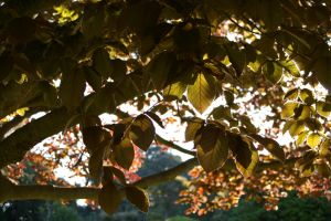 Perpetual Autumn 2 by FallowpenStock