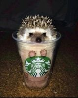 Hedgehog Spice by The--Mad--Russian
