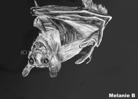 Bat picture for Becca by Mel-at-ne