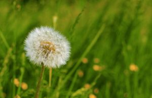 Allergies I by Glain07
