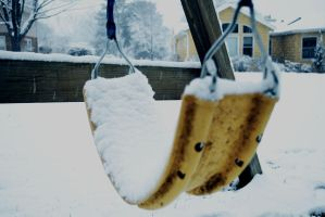 The Snow Stole My Swing by erstucky