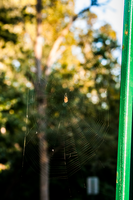In the Web by briant1234