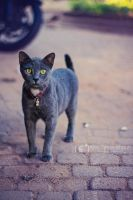 Case of the Curious Cat by alexgphoto