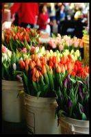 Washington Tulips _ pikes plac by punkgoddess
