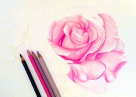 WIP drawing Rose color pencil by byMichaelX