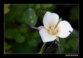 Wet Flower by Norcalsnoe