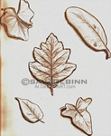 Leaf Study by savagebinn