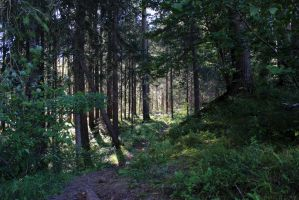 Forest path 11 by Pagan-Stock