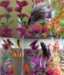 Double Tail Betta Fish by Lipizzaner-Kgirl