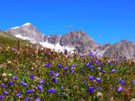 Mountain Flowers by GeneralBrae