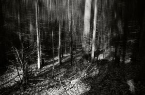 The woods by mabuli