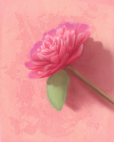 Rhododendron by Clouded-3D