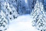 Winter background by Lubov2001