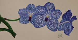 Vanda Blue Magic Watercolour by Mararda