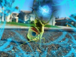 Praying Mantis 2 by slain4ever