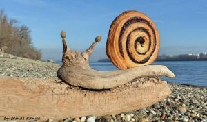 Driftwood art hungarian cocoa snail by tom-tom1969