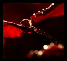 red by mmerrique