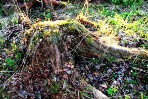 Old Tree Stump by Arnild